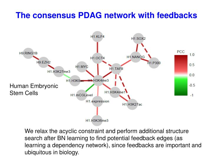 The consensus PDAG network with feedbacks