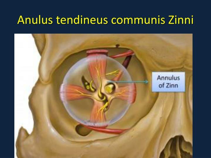 Anulus