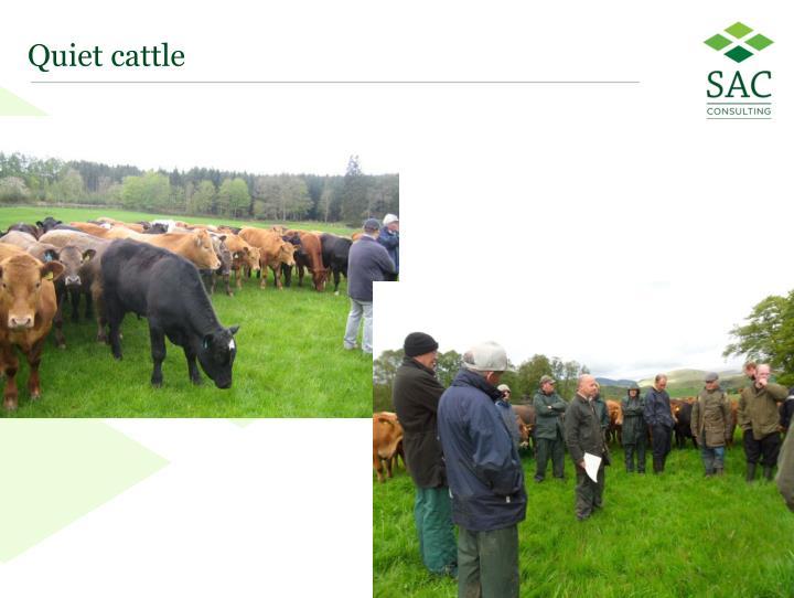 Quiet cattle