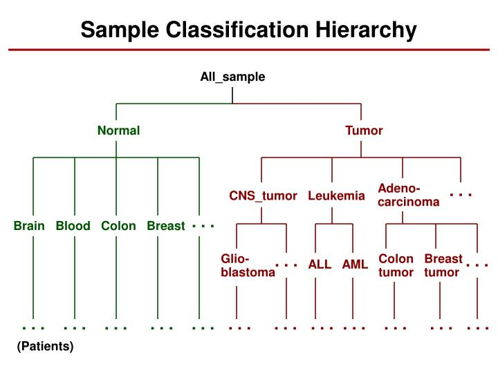 Sample Classification Hierarchy