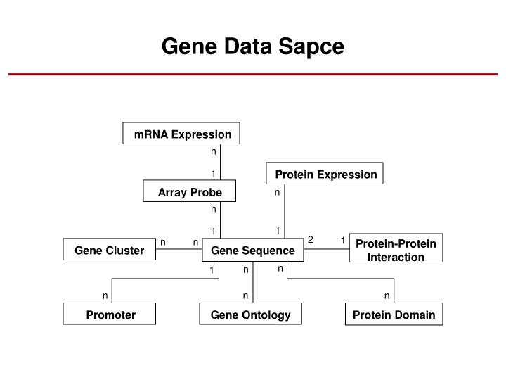Gene Data Sapce