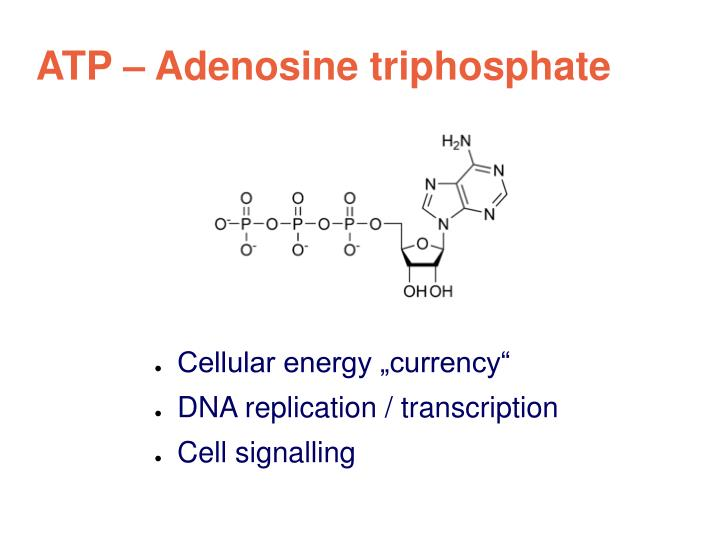 ATP – Adenosine triphosphate