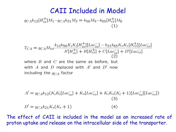 CAII Included in Model