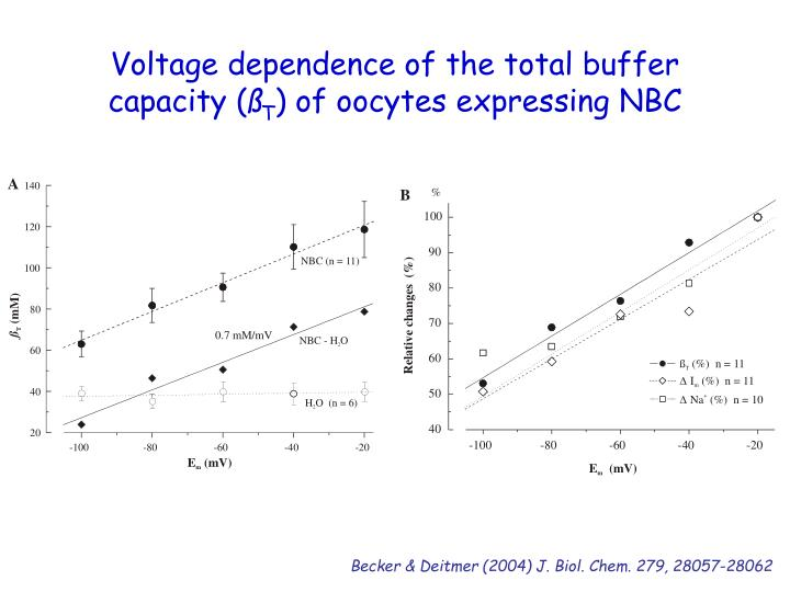 Voltage dependence of the total buffer capacity (