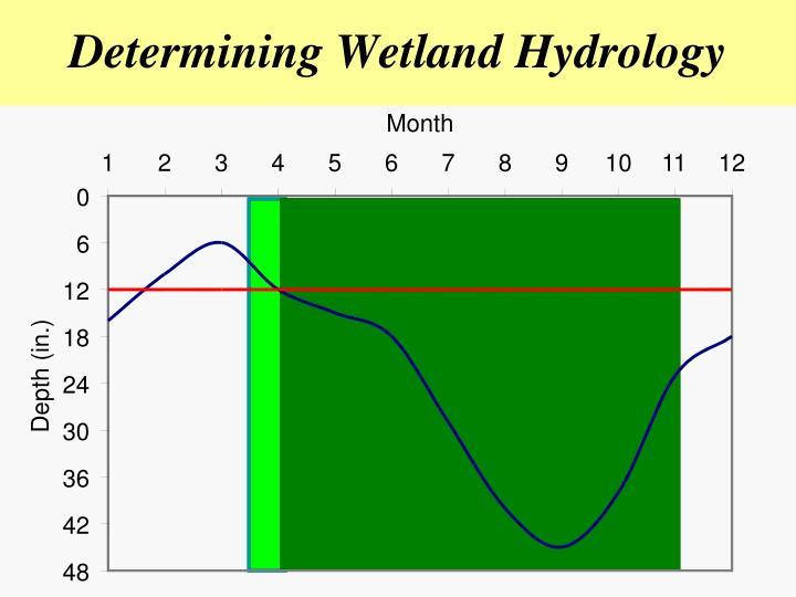 Determining Wetland Hydrology