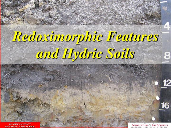 Redoximorphic features and hydric soils