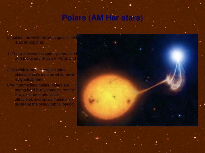 Polars (AM Her stars)
