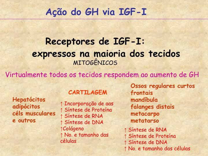 Ação do GH via IGF-I
