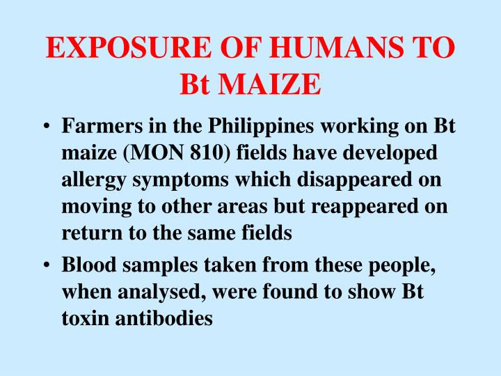 EXPOSURE OF HUMANS TO Bt MAIZE