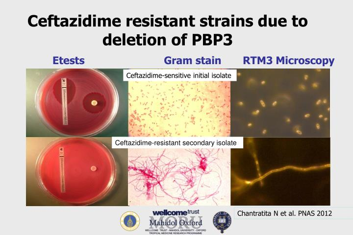 Ceftazidime resistant strains due to deletion of PBP3