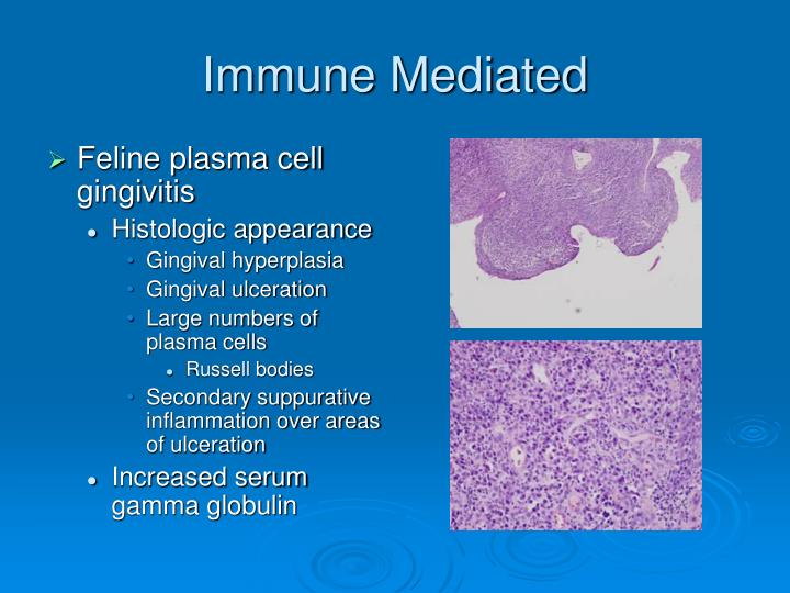 Immune Mediated