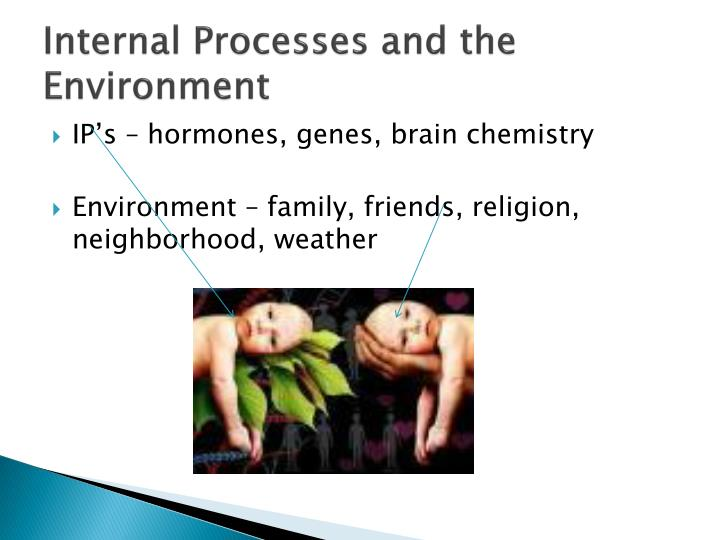 Internal Processes and the Environment