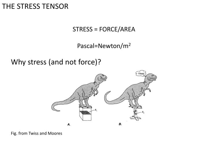 THE STRESS TENSOR