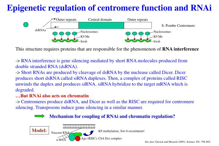 Epigenetic regulation of centromere function and RNAi
