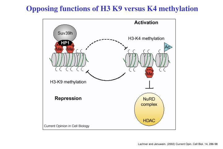 Opposing functions of H3 K9 versus K4 methylation