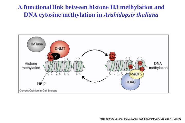 A functional link between histone H3 methylation and DNA cytosine methylation in