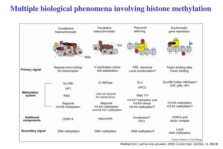 Multiple biological phenomena involving histone methylation