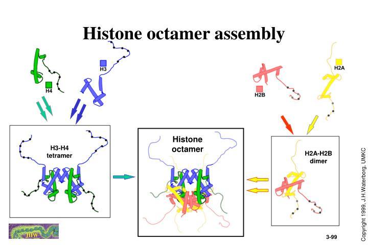 Histone octamer assembly