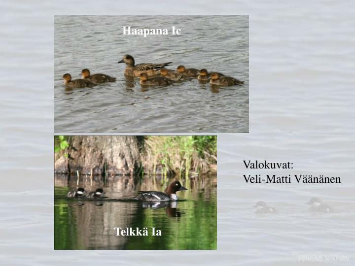 Haapana Ic