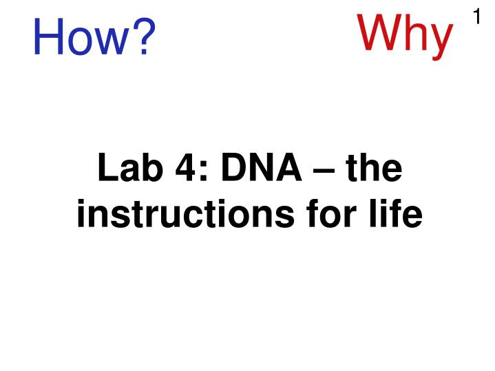 lab 4 dna the instructions for life