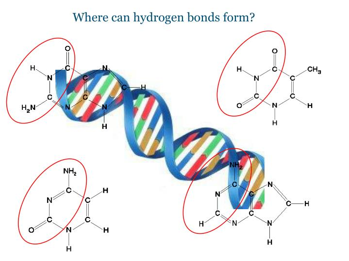Where can hydrogen bonds form?