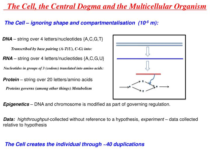 The Cell, the Central Dogma and the Multicellular Organism