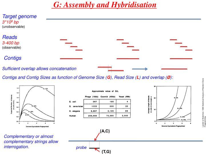 G: Assembly and Hybridisation