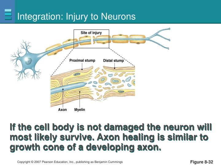 Integration: Injury to Neurons