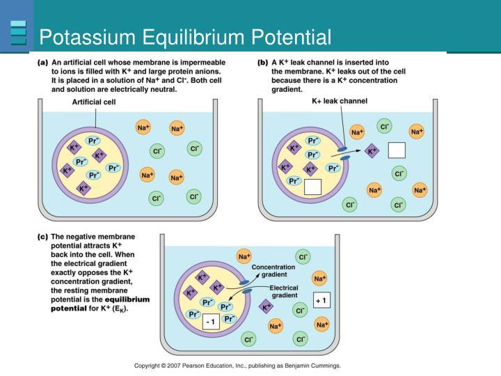 Potassium Equilibrium Potential