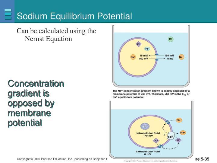 Sodium Equilibrium Potential
