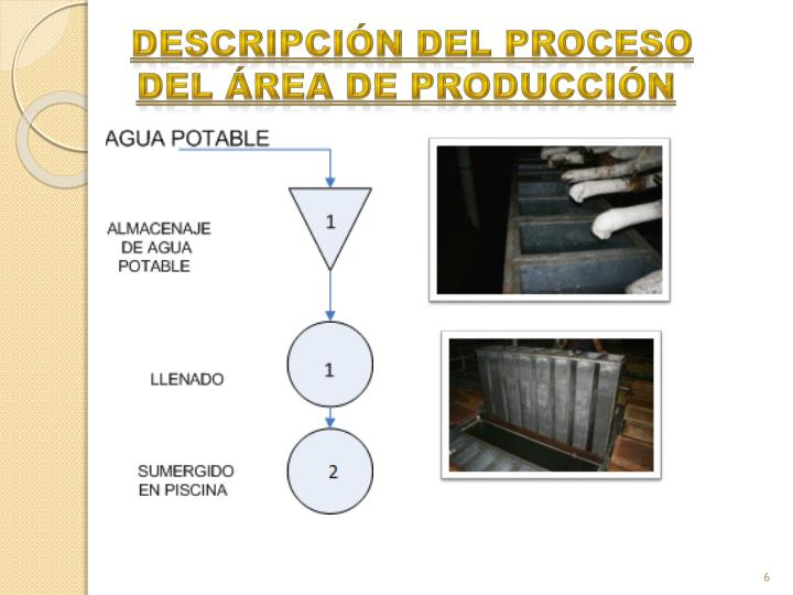 descripción del proceso del área de producción