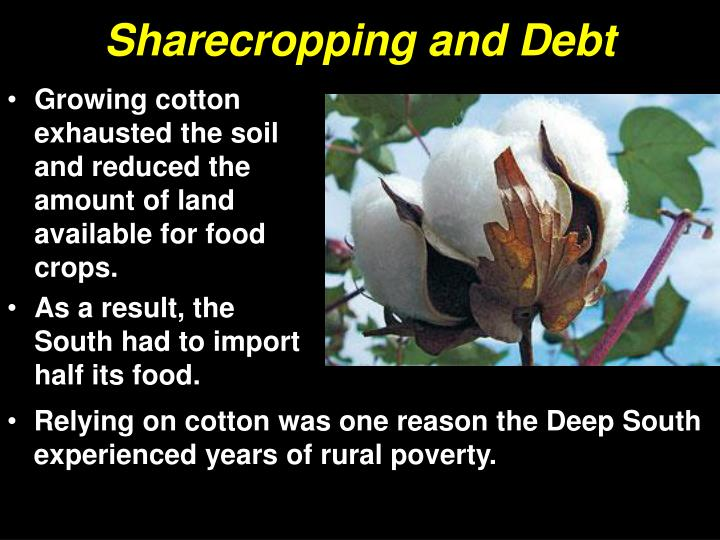 Sharecropping and Debt