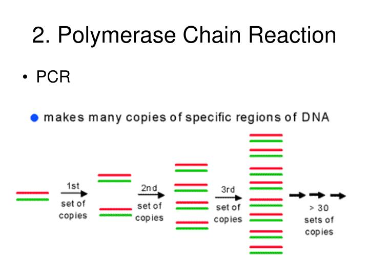 2. Polymerase Chain Reaction