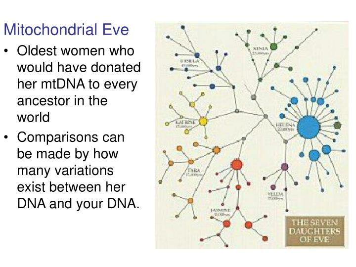 Mitochondrial Eve