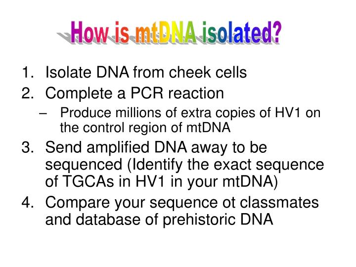 How is mtDNA isolated?