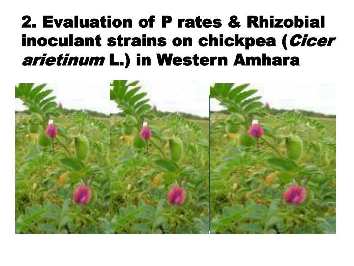 2. Evaluation of P rates & Rhizobial inoculant strains on chickpea (
