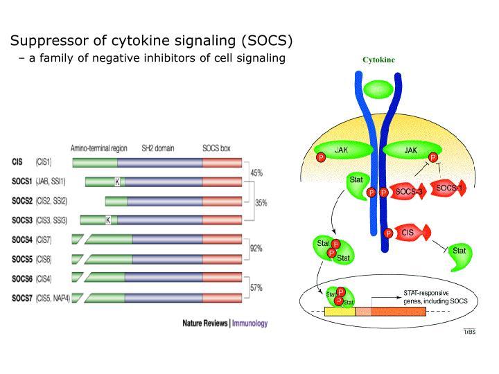 Suppressor of cytokine signaling (SOCS)