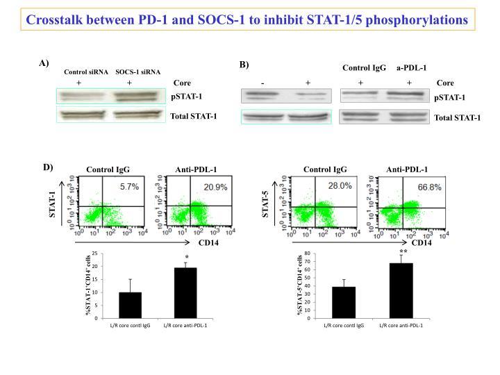 Crosstalk between PD-1 and SOCS-1 to inhibit STAT-1/5 phosphorylations