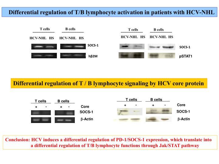 T cells             B cells