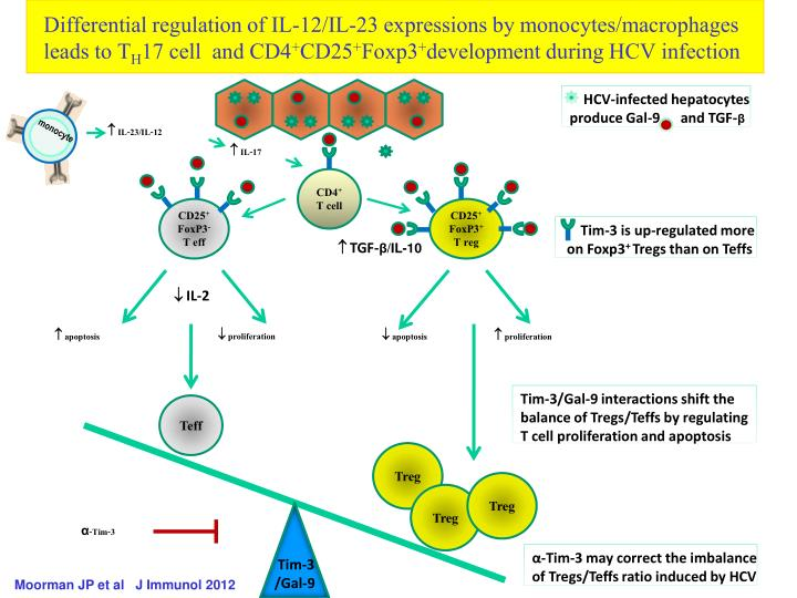 Differential regulation of IL-12/IL-23 expressions by
