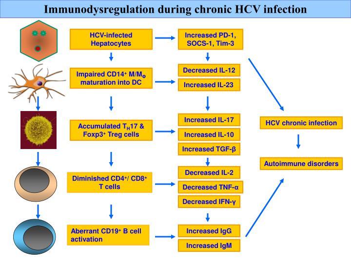 Immunodysregulation during chronic HCV infection