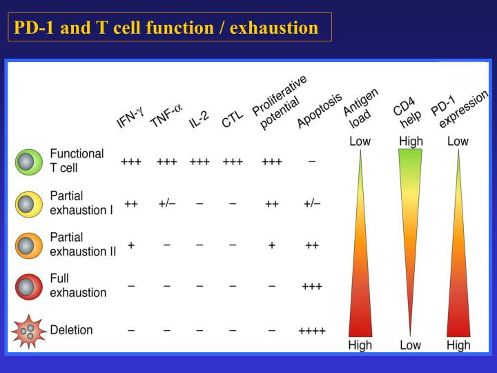 PD-1 and T cell function / exhaustion