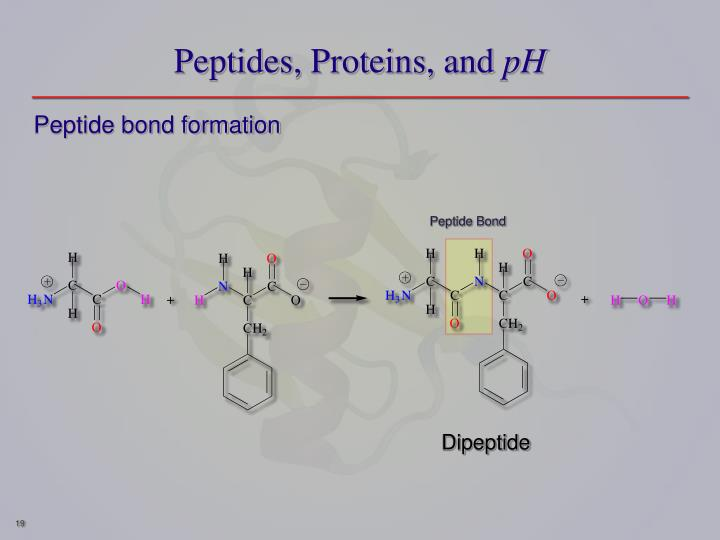 Peptides, Proteins, and