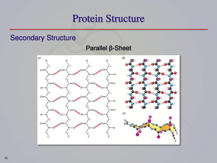 Protein Structure