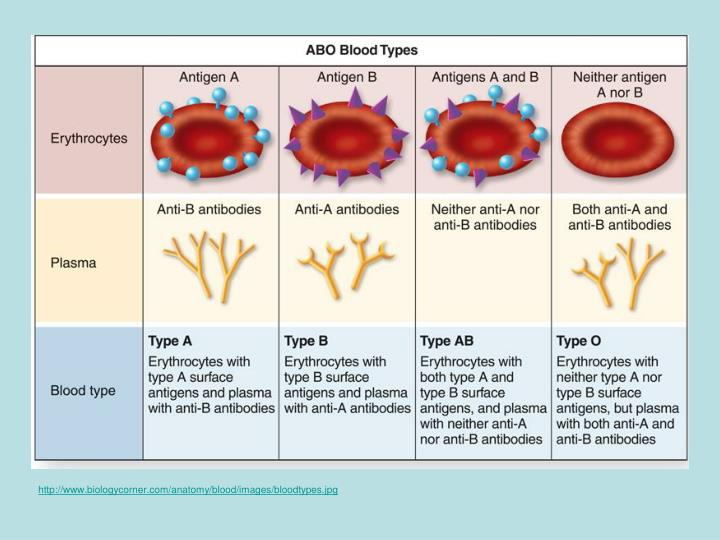 http://www.biologycorner.com/anatomy/blood/images/bloodtypes.jpg