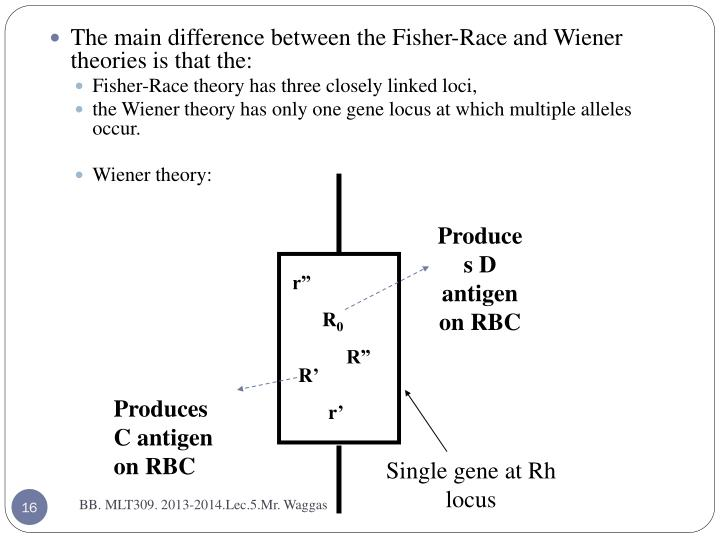 Produces D antigen on RBC