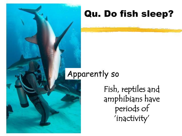 Qu. Do fish sleep?