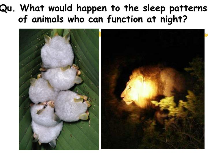 Qu. What would happen to the sleep patterns of animals who can function at night?