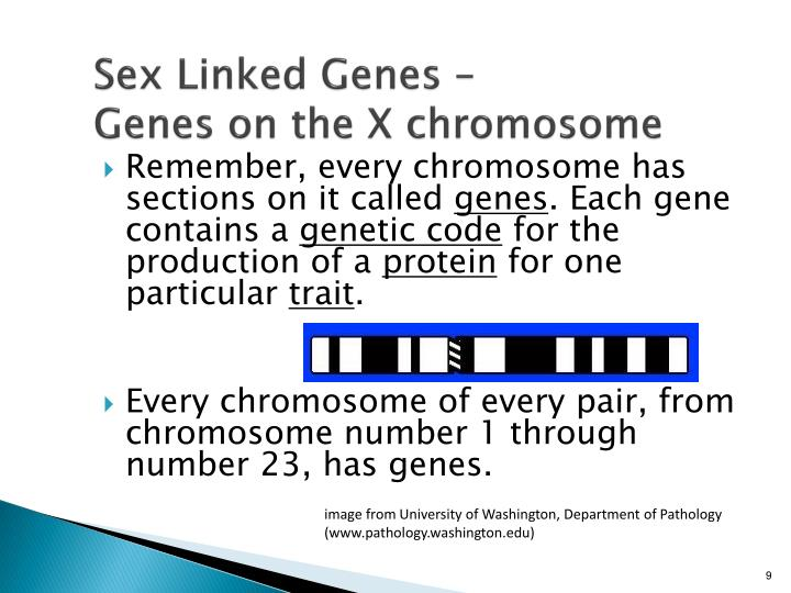Sex Linked Genes –