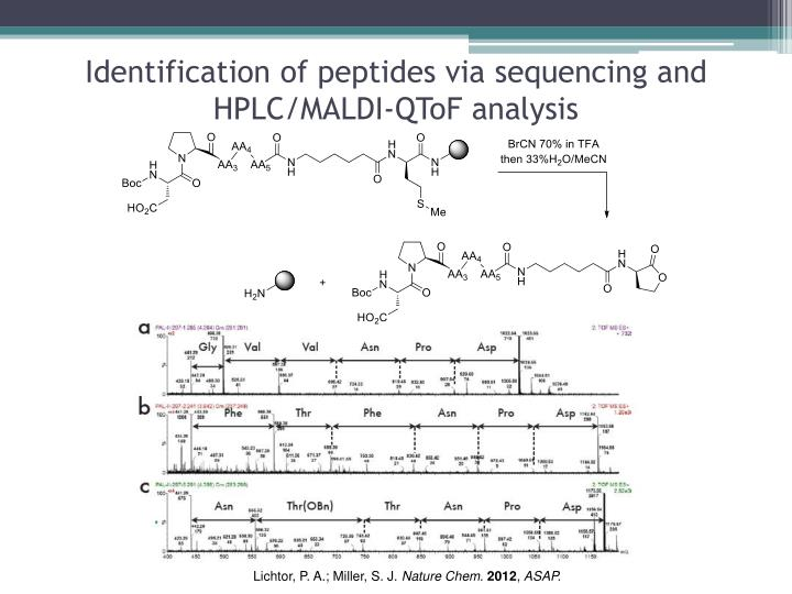 Identification of peptides via